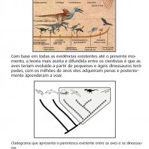 DinossaurosBannerComprimido