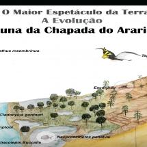 Outro-Banner-do-Araripe