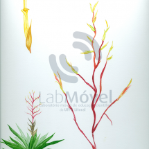 Vriesea philippocoburgii0001 copy